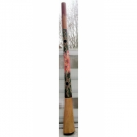153 cm HIGH CLASS EUKALYPTUS-DIDGERIDOO => BIG BELLEND